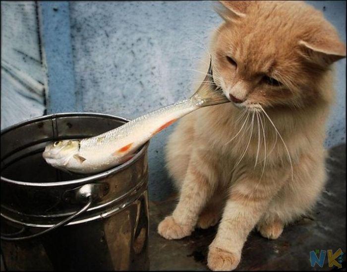 Коты рыболовы (смешное видео)