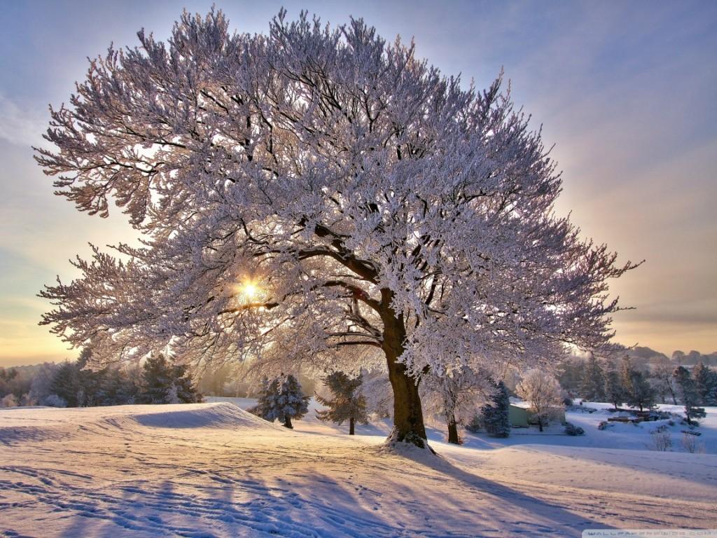 Красота зимней природы для хорошего настроения