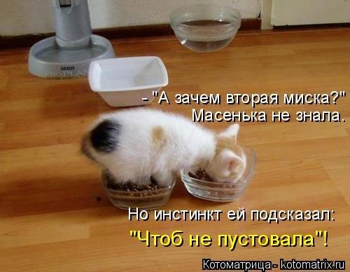 Свежая котоматрица для всех …