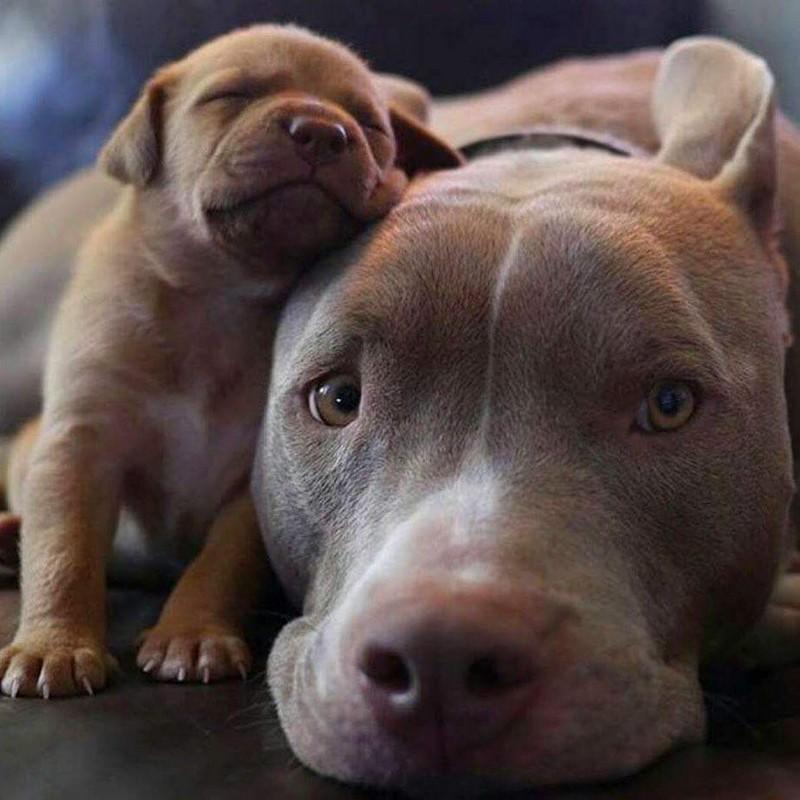 Картинки собак и щенков смешных, тремя месяцами