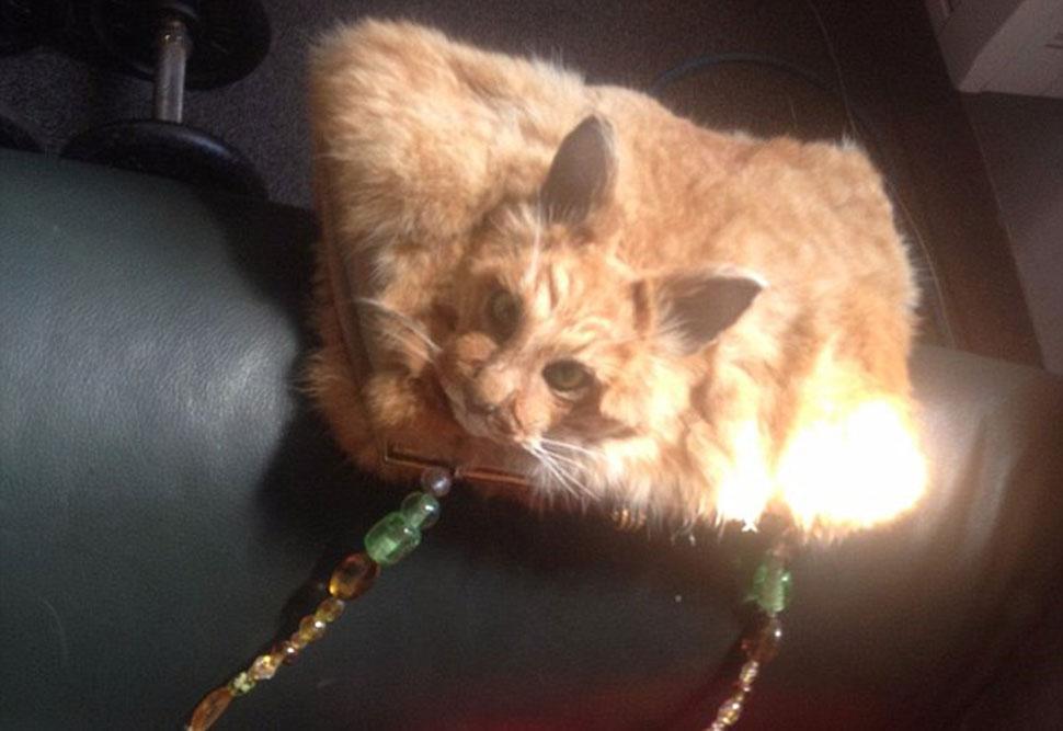 Таксидермистка из Новой Зеландии спровоцировала скандал, выставив на аукцион сумочку из кошки