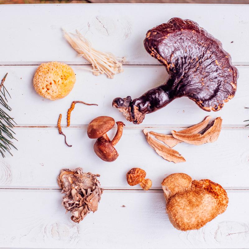 Секреты лечения грибами: Как «работают» целебные грибы грибов, фунготерапии, раковых, недугах, составе, грибы, недугов, атеросклерозе, можно, сфере, употребляют, заболеваний, грибами, лечение, медицины, специалист, данный, вирусы, посредством, возможности