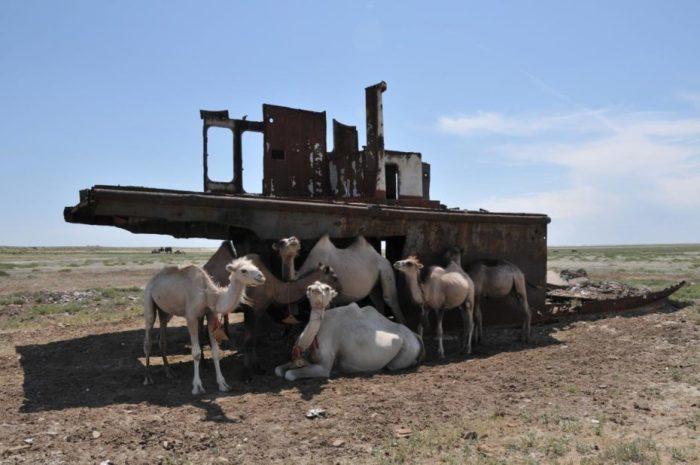 Техногенная катастрофа превратила море в пустыню. /Фото:messynessychic.com