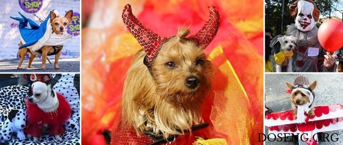 К Хэллоуину готовы: парад со…