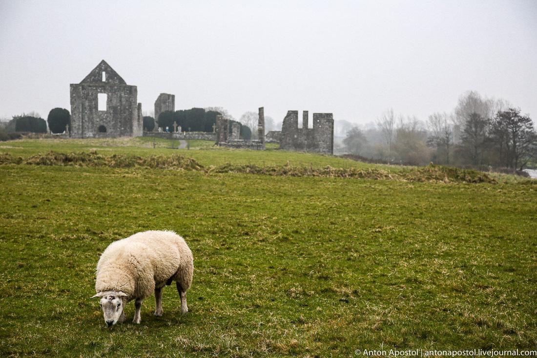 Ирландская прогулка