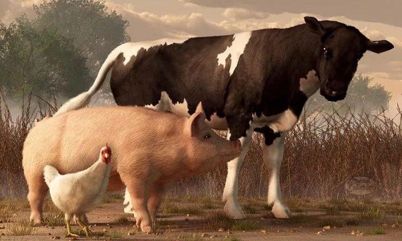 ПРИТЧА НЕДЕЛИ. Корова и свинья