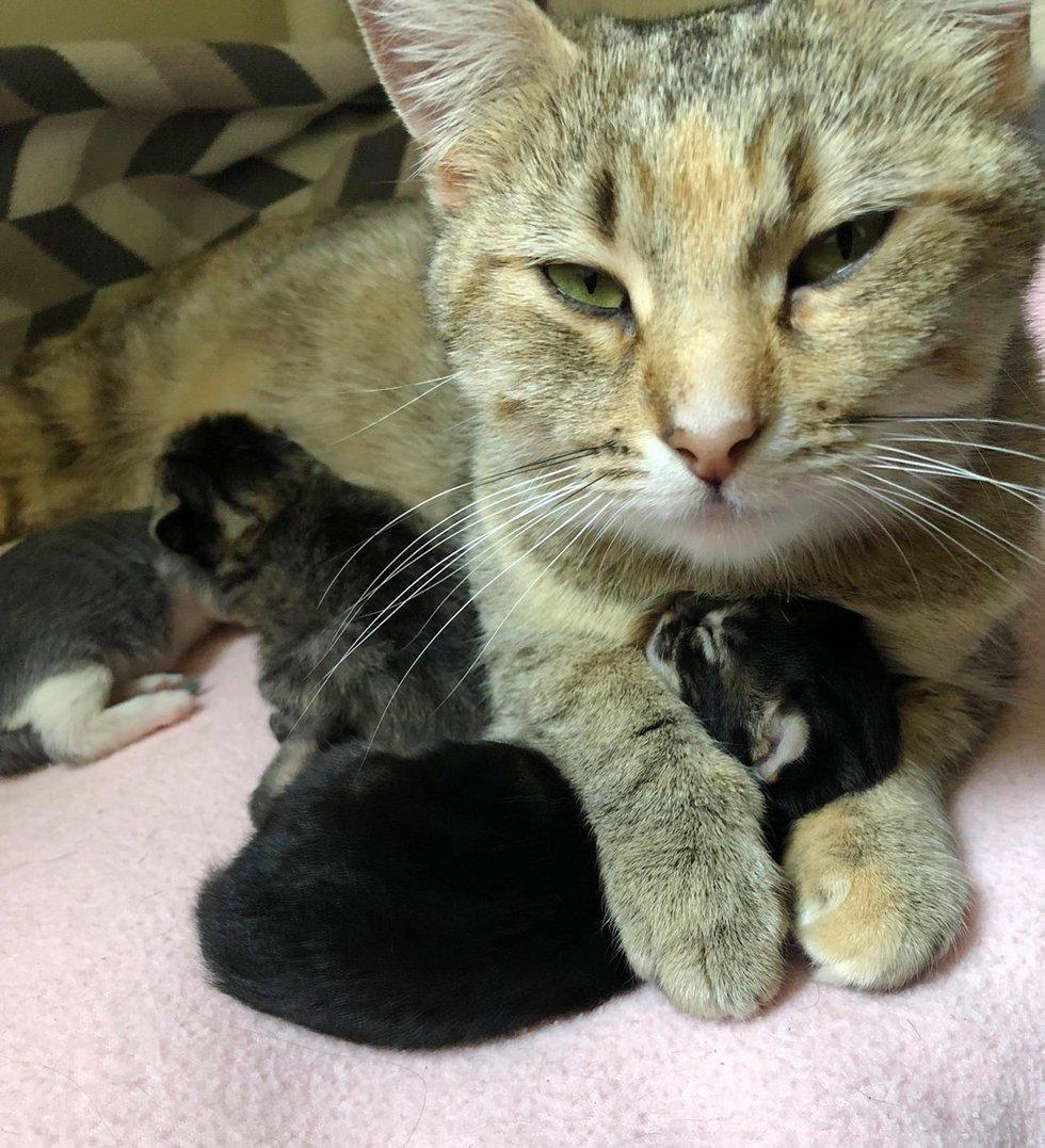 Бездомная кошка оказалась лучшей в мире мамой! Теперь мурлыку переполняет благодарность к спасителям