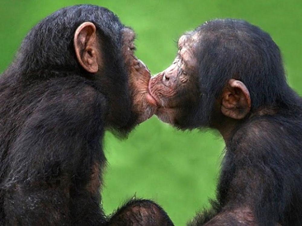 Картинка смешные поцелуи