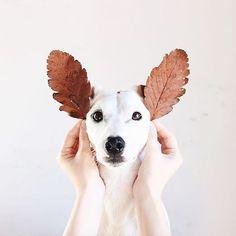 Правильно ли вы любите свою собаку? В своей статье Валерий Варлаков...