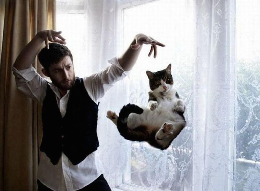 Лучшие фото кошек всех времен. Часть первая
