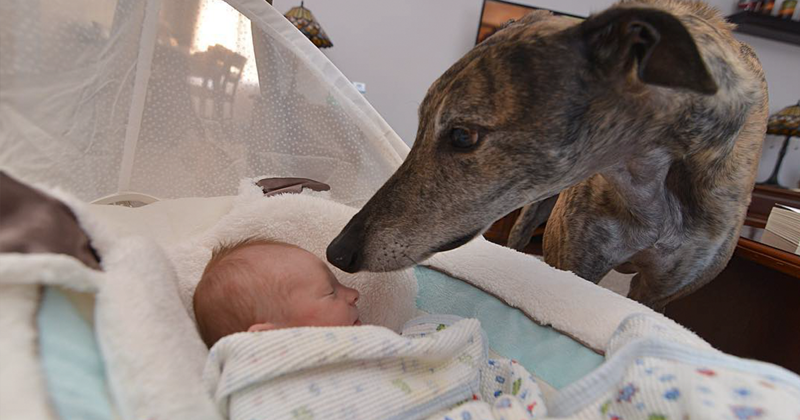 Ребенок вернул собаке любовь к людям.