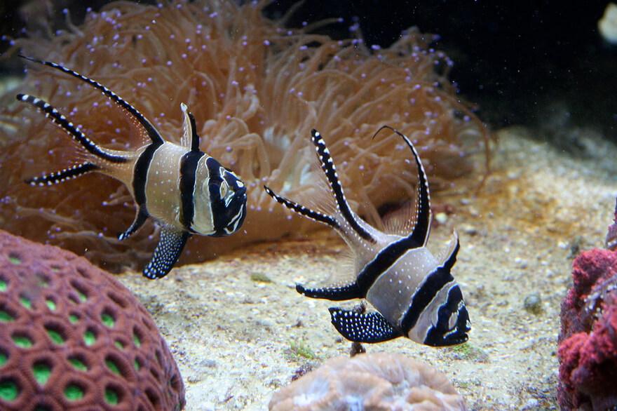 25 самых удивительных морских существ