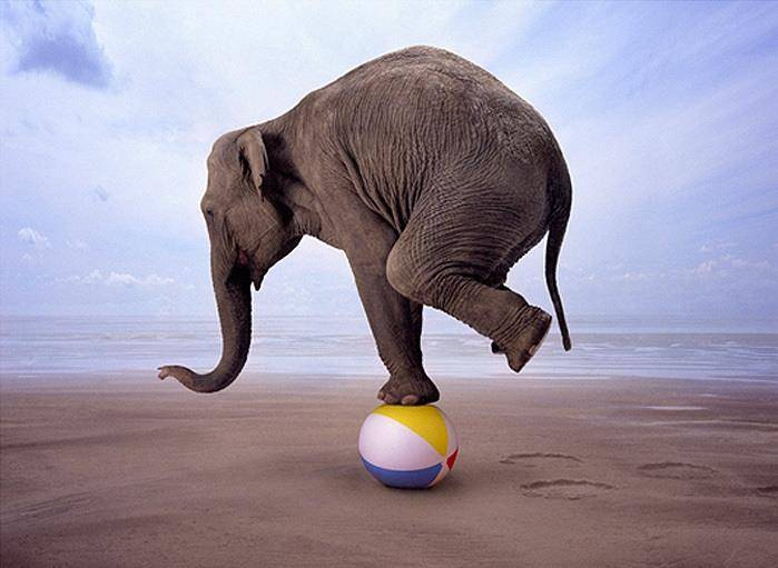 Азиатский слон стал нелегаль…