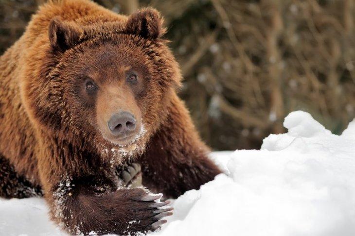 Если повстречал медведя
