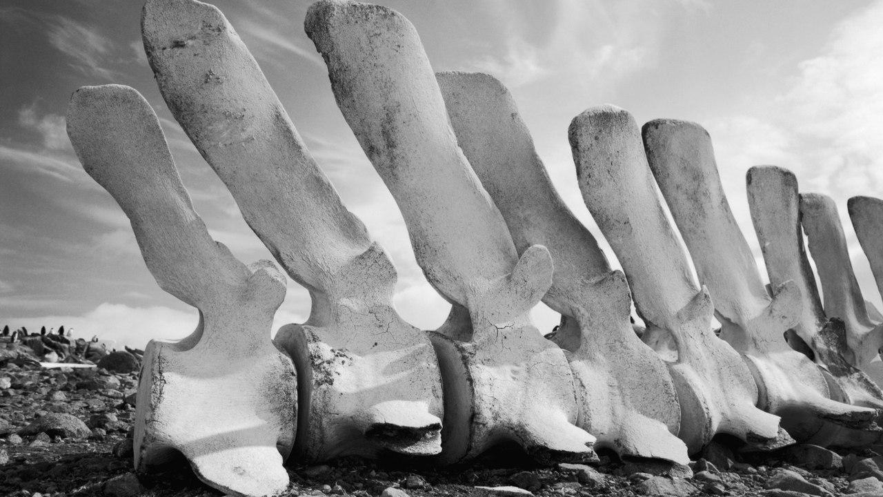 Одно из чудес России - Китовая аллея на Чукотке