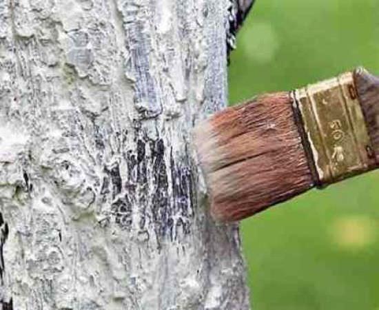 Как укрыть деревья на зиму?