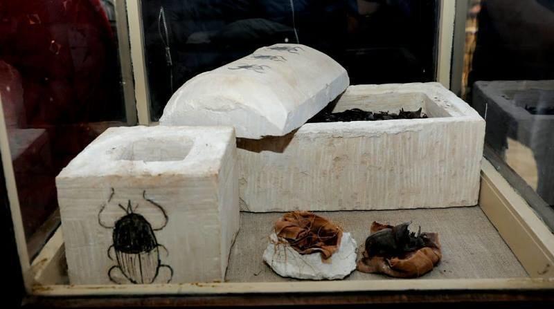 Два больших скарабея в очень хорошем состоянии, завернутые в полотно, находились внутри известняковой саркофага со сводчатым украшенной крышкой Египт, в мире, гробницы, кошки, мумия, находка, пирамиды