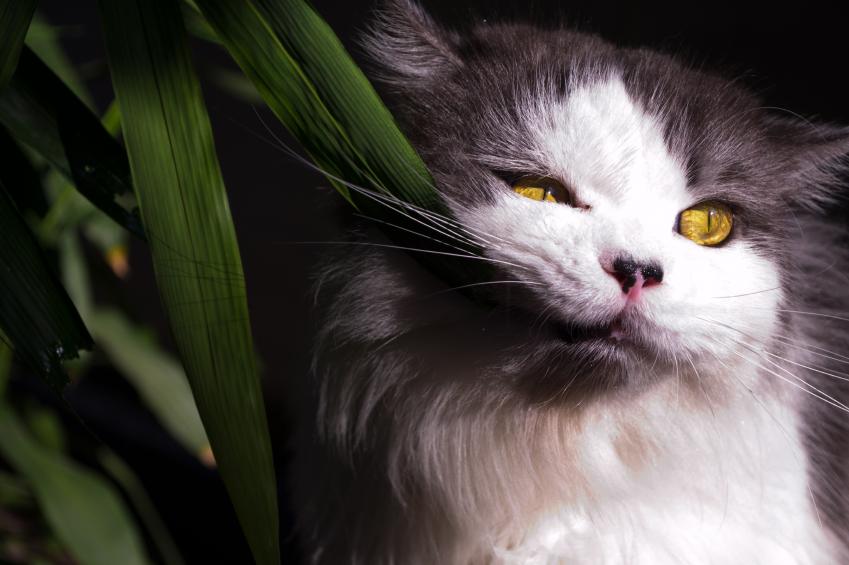 10 комнатных цветов, которые опасны для детей, кошек и собак