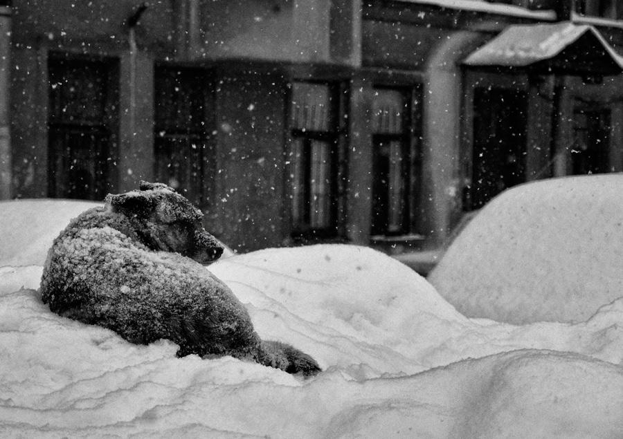 Картинки по запросу Снег