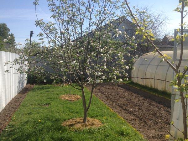 Зачем собирать лесной мох для сада?