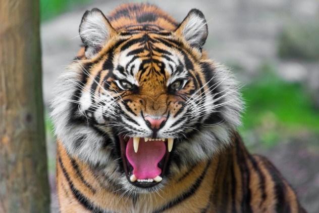 10 интересных фактов о дикой природе Индии