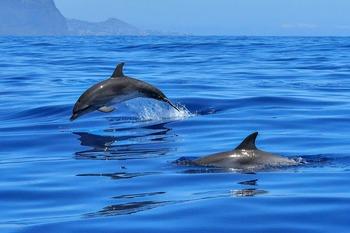 На берег в Австралии выбросились более 150 дельфинов, видео