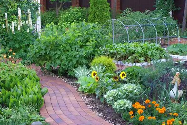 Четыре типичные ошибки начинающих садоводов