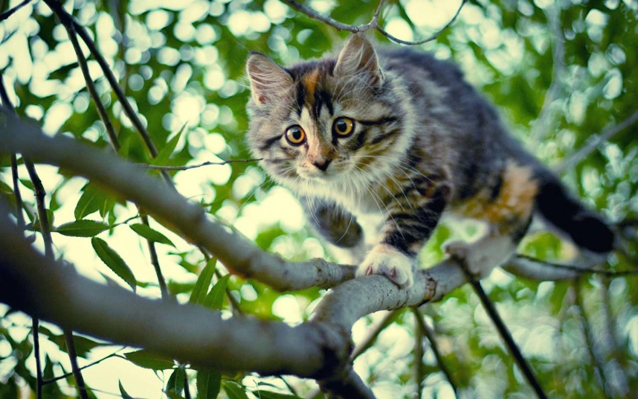 Краткая инструкция как НЕ надо спасать кошку