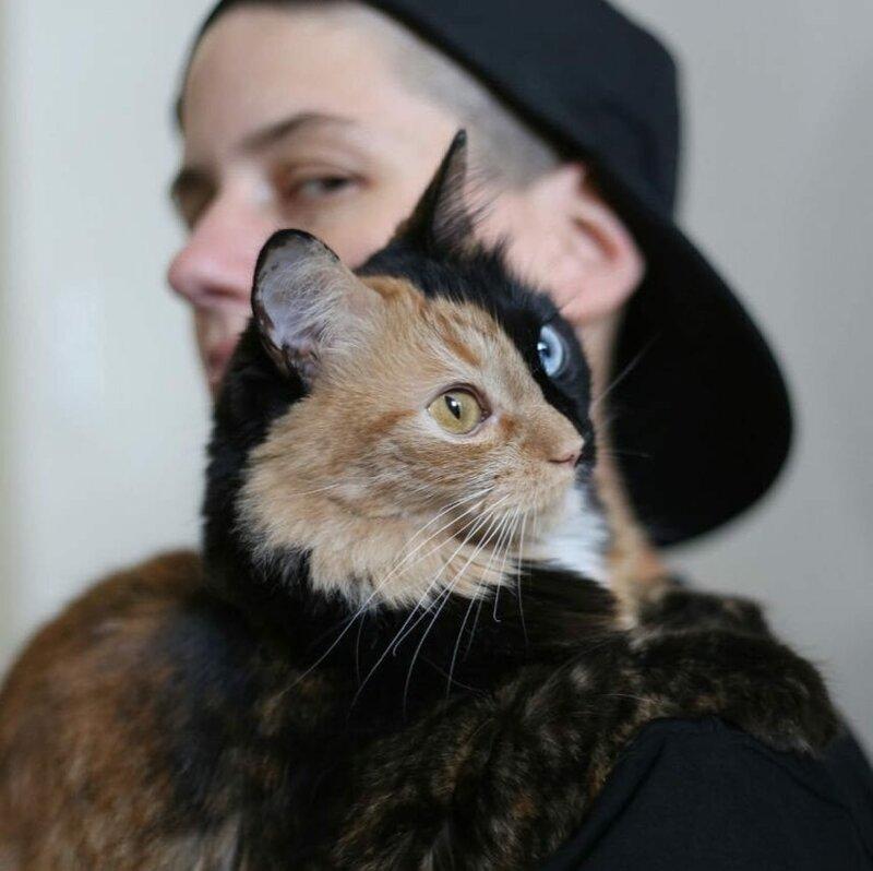 Если смотреть на неё в профиль, то кажется, что она — котейка как котейка домашний питомец, животные, кошка, красота, окрас, смесь, химера