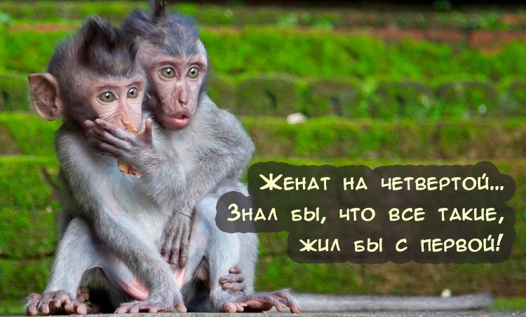 Смешную картинку для настроения мужчине, картинки для
