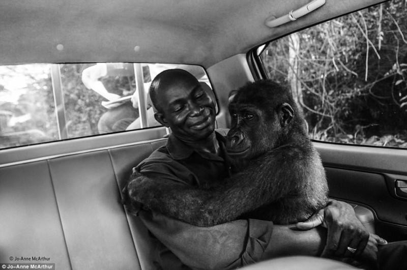 Самое трогательное фото из лучших работ конкурса Wildlife Photographer of the Year