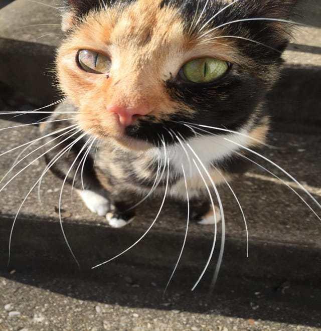 Бездомная кошка принесла своего котенка девушке. Взяв его на руки, она поняла причину этого поступка