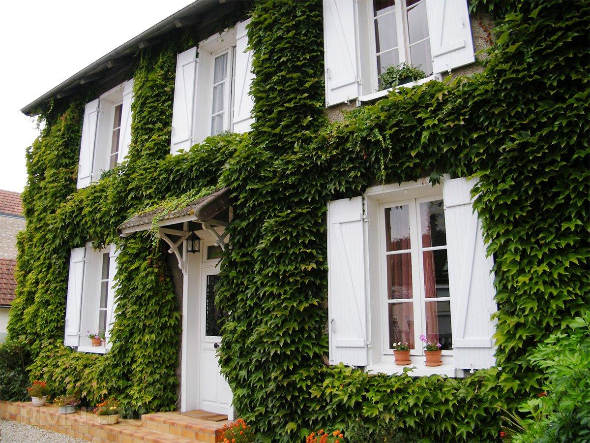 Зелёный фасад: зачем обустраивать и какие растения выбрать