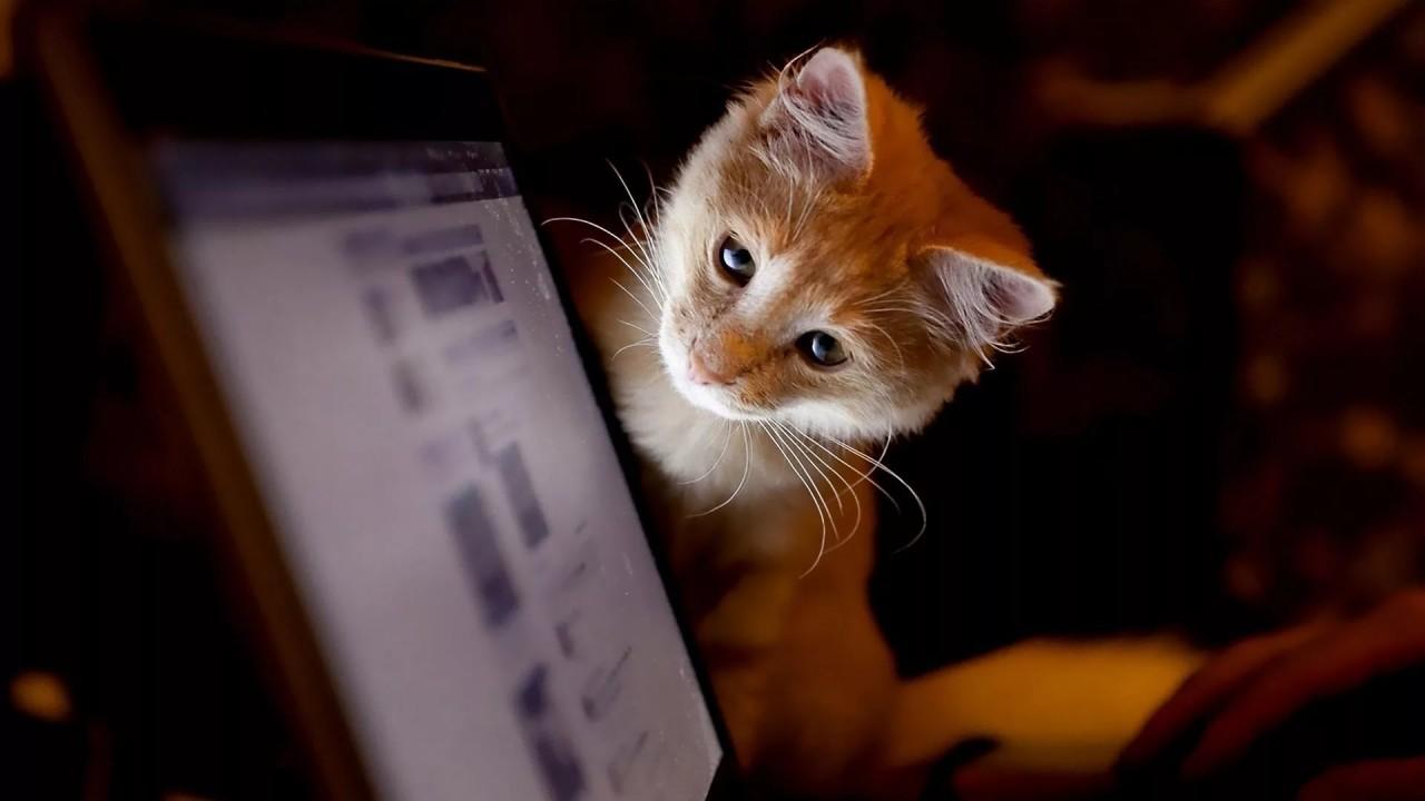 Кошачий стресс-тест