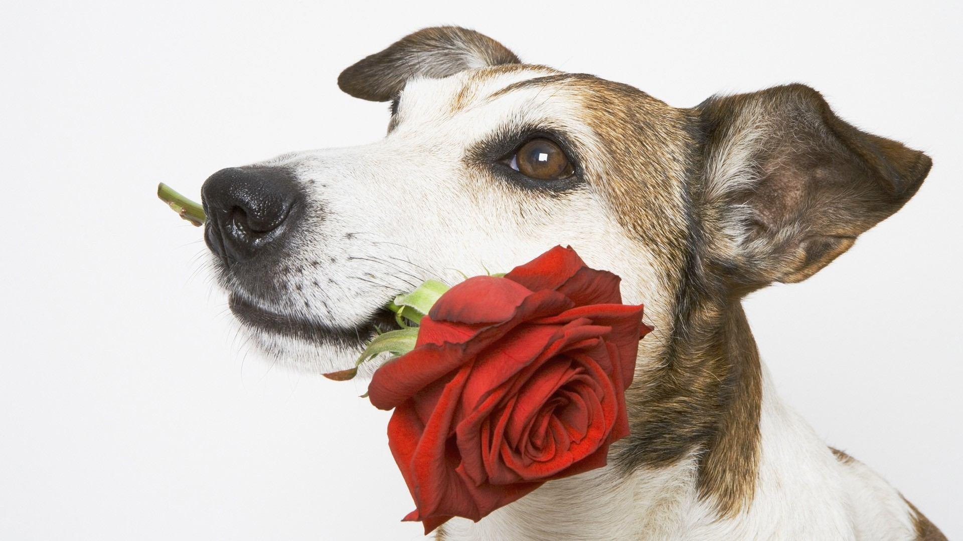 действия картинки животных для поздравления с днем рождения правило