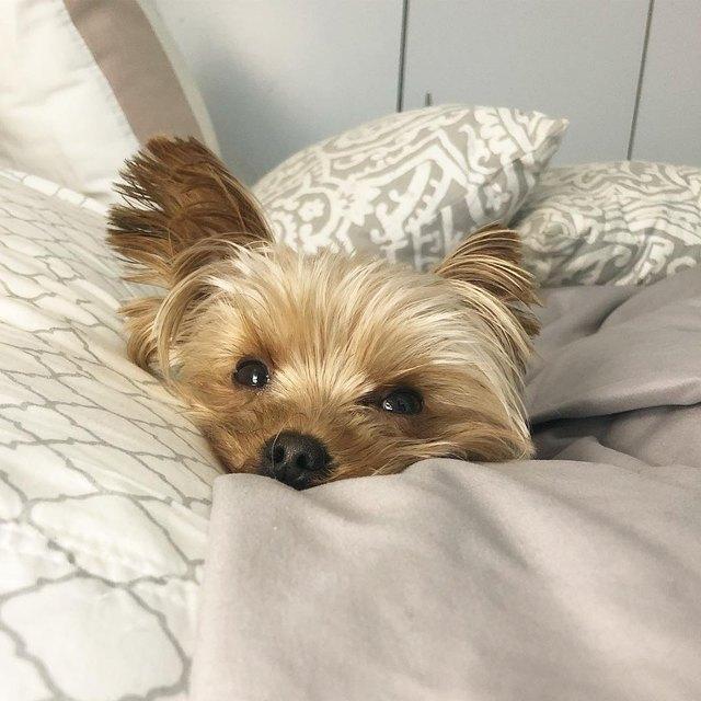 2. И вставать по утрам очень рано ему не надо животные, кошка, милые, собака, фото
