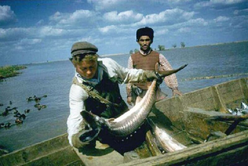 Неутолимая жажда наживы. «Рыбное дело», СССР, страницы истории
