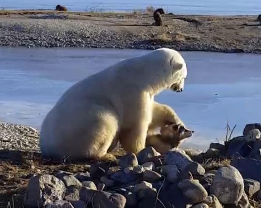 В это невозможно поверить. Белый медведь гладит собаку по голове
