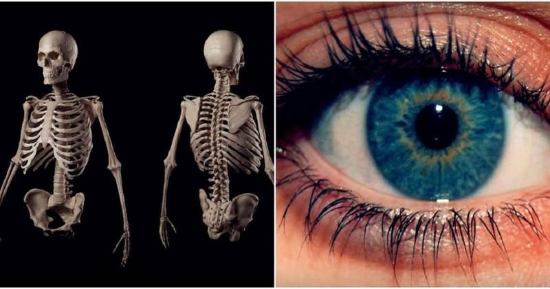 Поразительные тайны человеческого тела интересно, познавательно, тело, факты