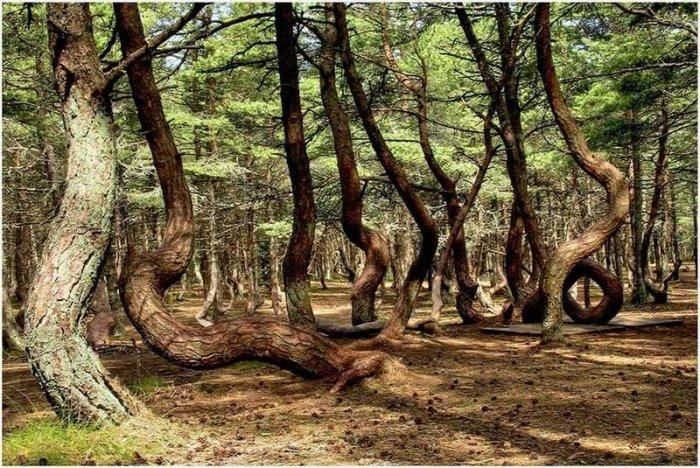 Тайна Танцующего Леса до сих пор не раскрыта.