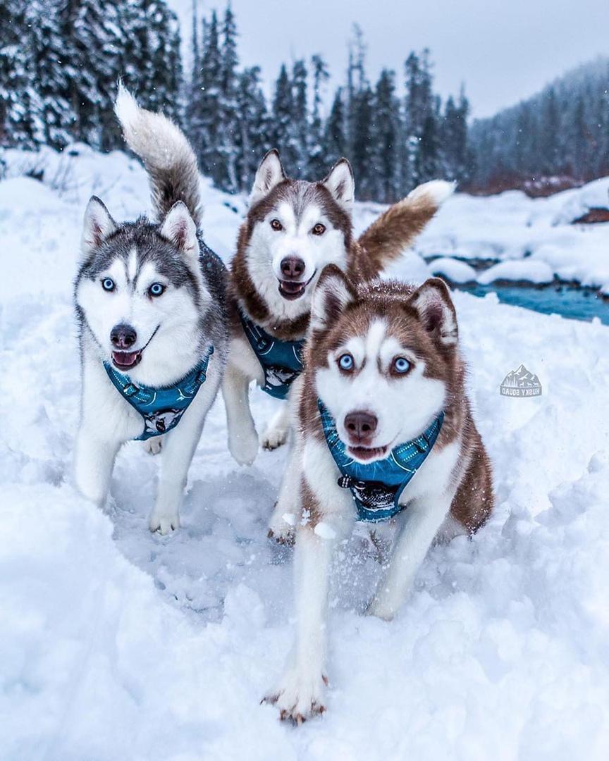 huskies 68 61 gliac win - 736×920
