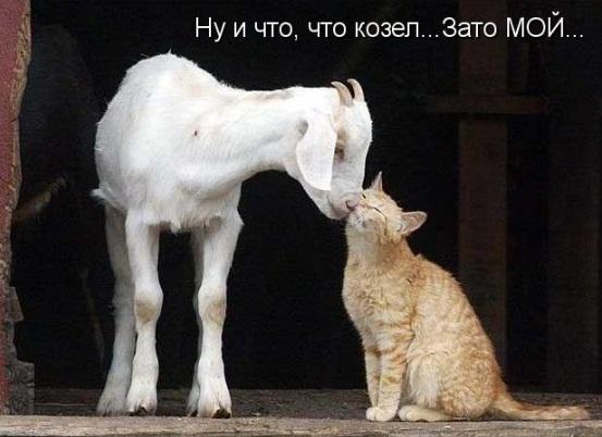 Кошка и козленок - лучшие друзья