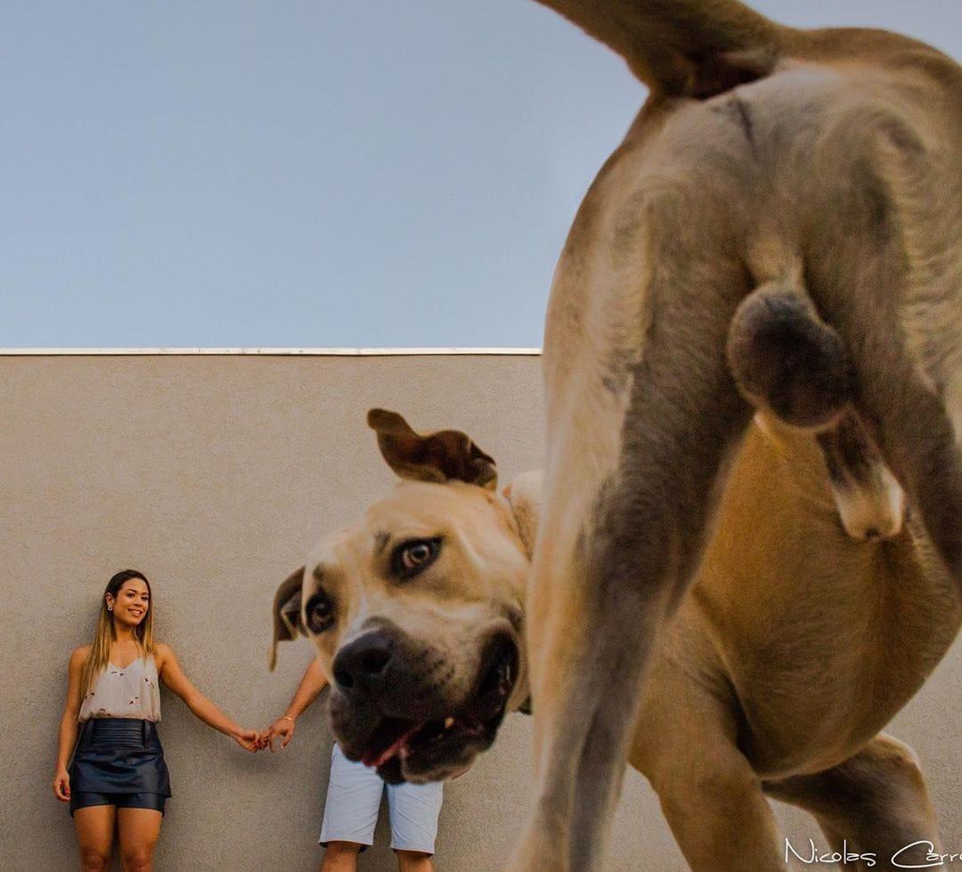Веселая фотосессия собаки,фотосессия,юмор и курьезы