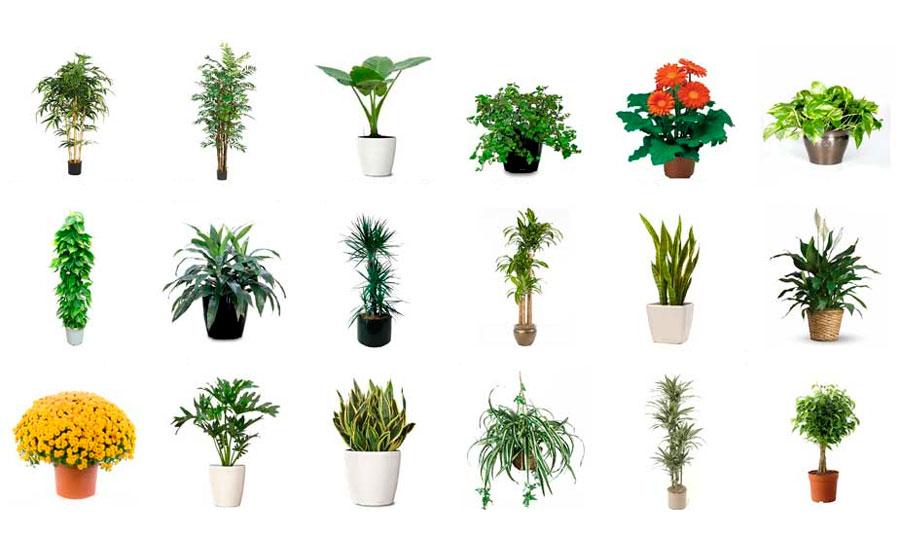 Комнатное растение от а до я с картинками