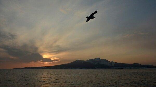 Россия предупредила Японию о том, что бартера на Курильские острова никогда не будет новости,события