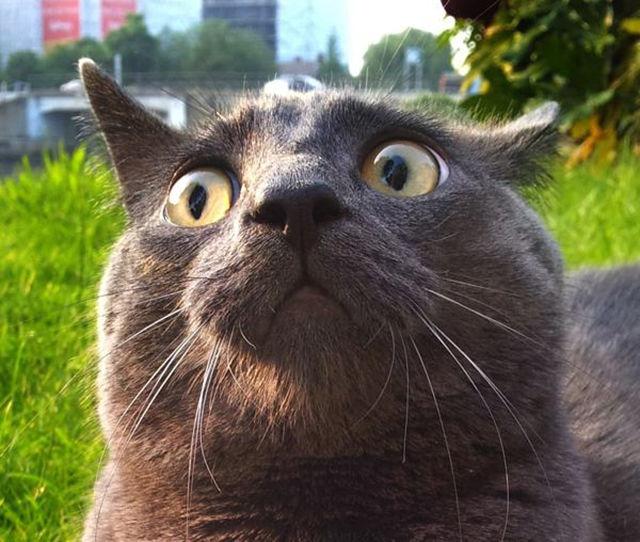 Коты в шоке.  Реакция  на пе…