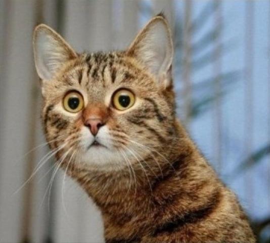 Смешная история о нервном  коте и его лекарстве