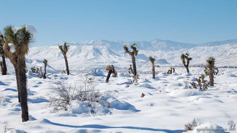 Вот так запросто песчаная пустыня превращается в снежную зима, мир, снег, юмор