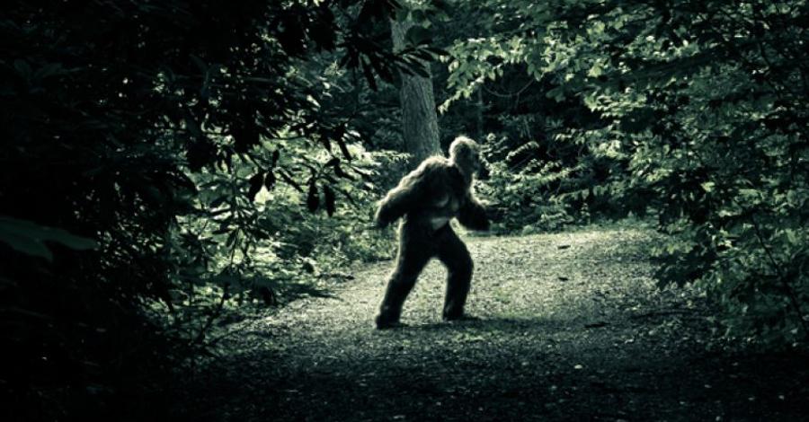 7 животных ищут уже сотни лет: пока у людей нет доказательств их существования