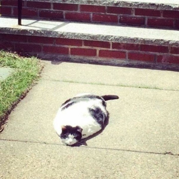 Кошко-коврик животные, расслабленность, смешно, фото